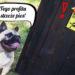 najlepsze profile z psami