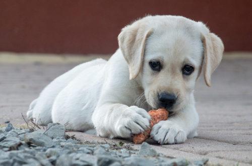 co zrobić jeśli pies zje trutkę