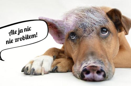 dlaczego psy tarzaja sie w kupach